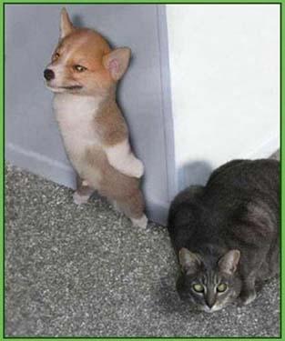 Hond vs kat copy