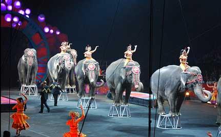 Circusolifanten copy