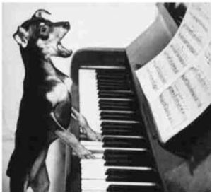 piano-hondje-copy