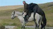 IJsland horses copy