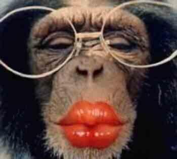 Chimp met lipstick