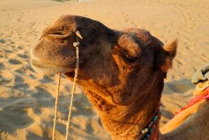 Kamelenkop