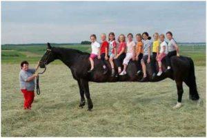 Verlengd paard, Tijdgeest Magazine